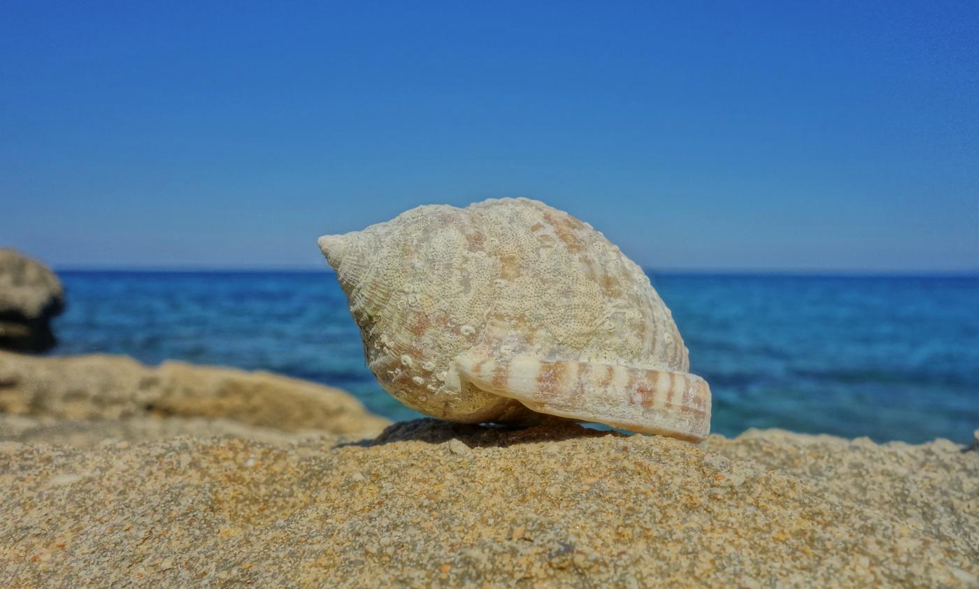 Šum moře