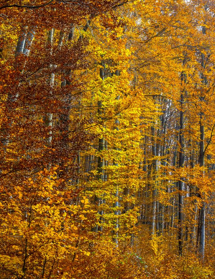 50 odstínů podzimu