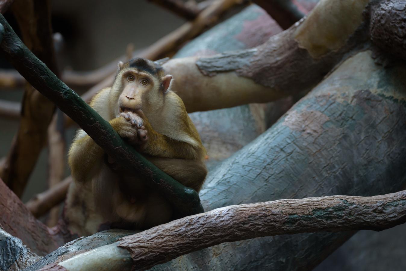 Zamilovaná opice