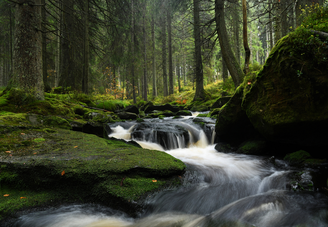 Filipohuťský potok 2