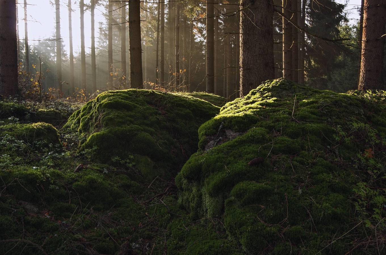 Ráno v lesní samotě...