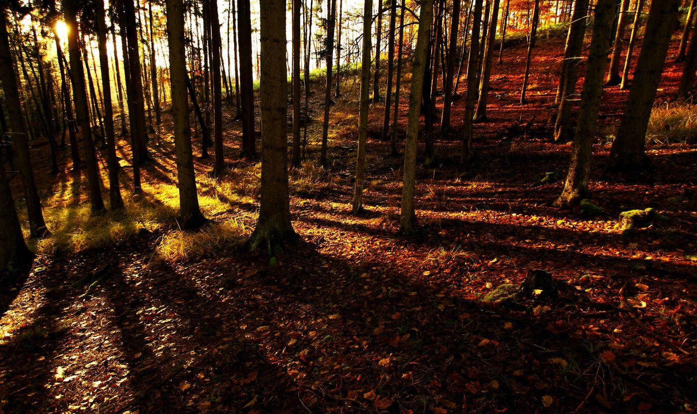 Poslední podzimní....