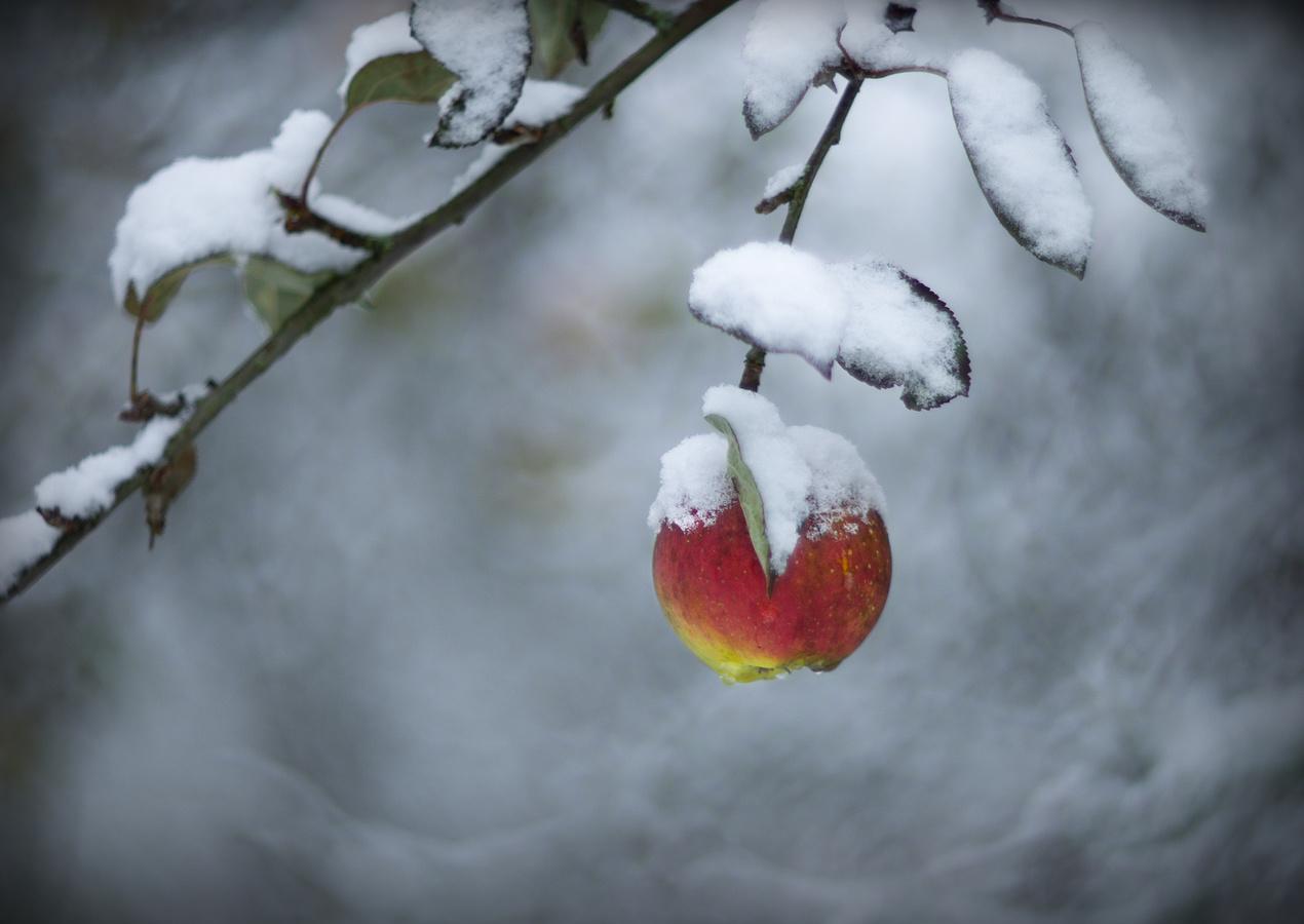 V zimní zahradě