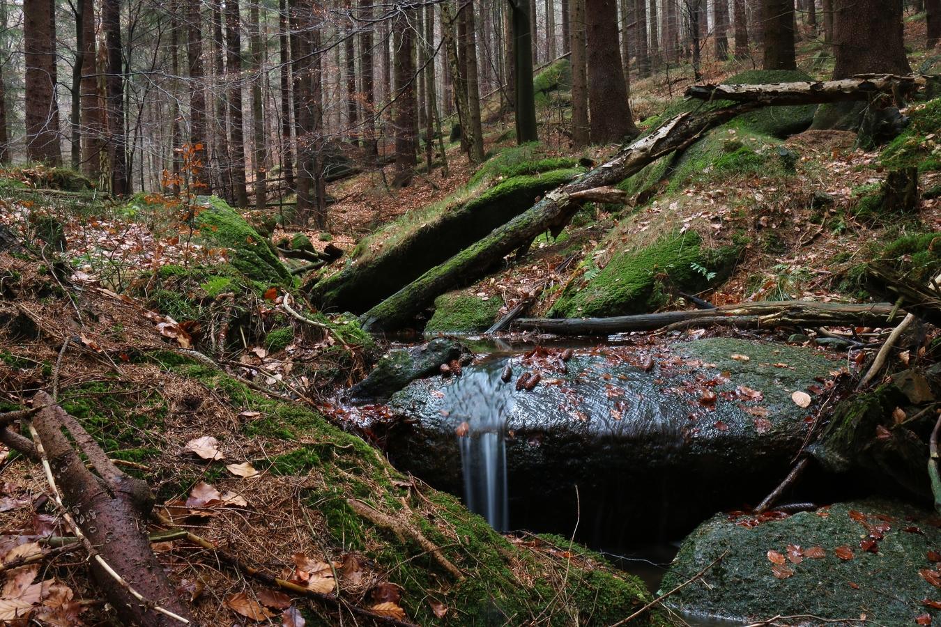 Les plný potůčků s mini vodopády ll.