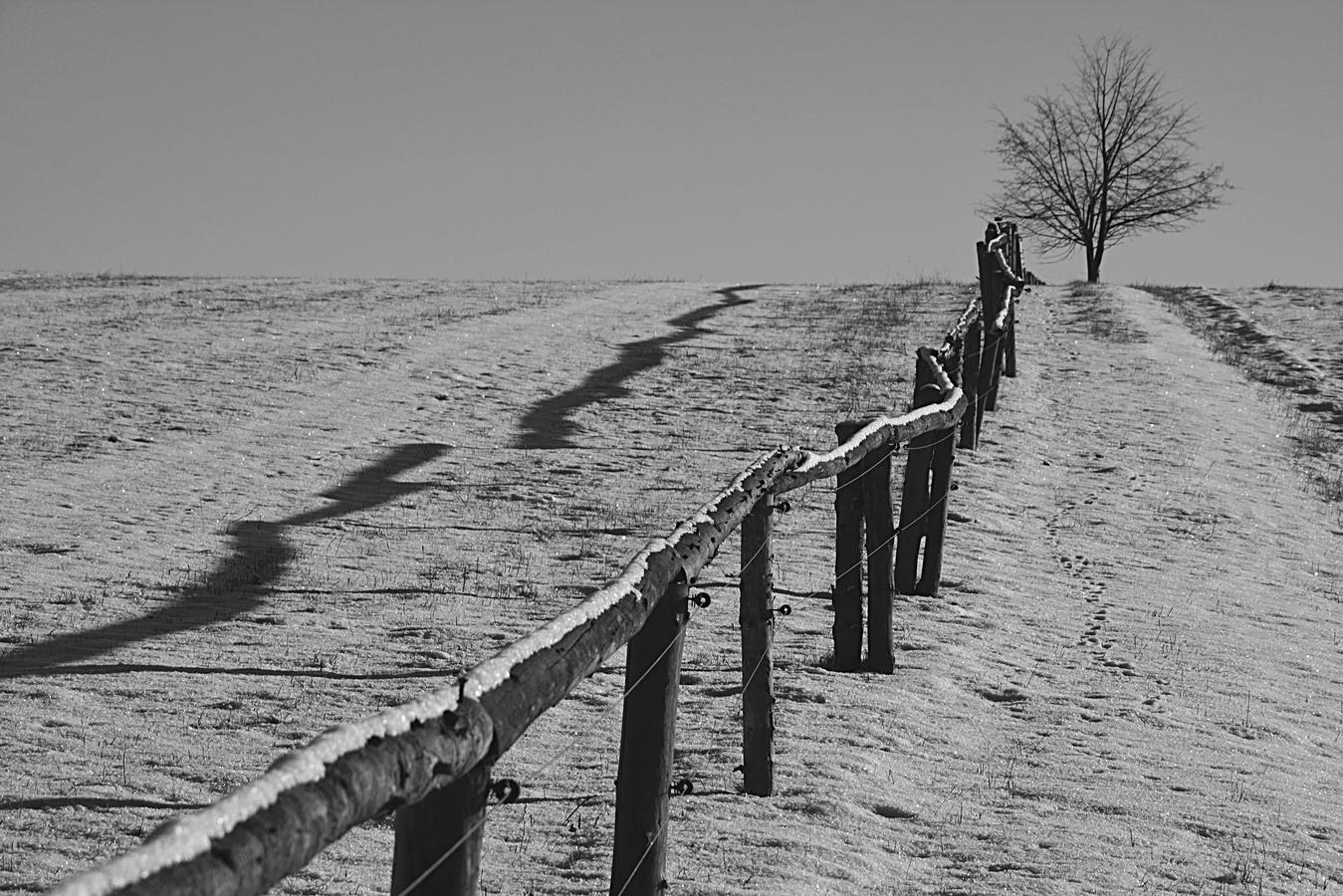 Zima na pastvinách...