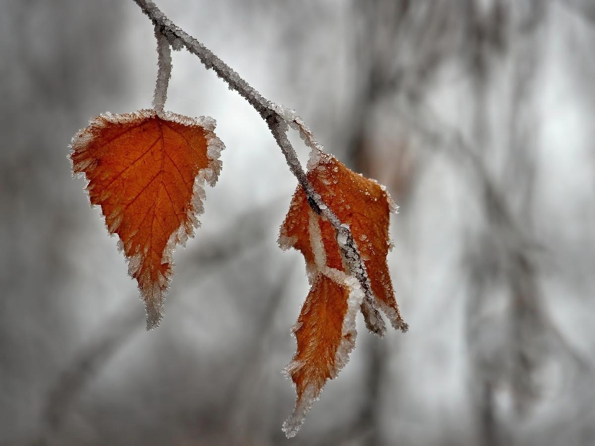 Zima a mráz.....