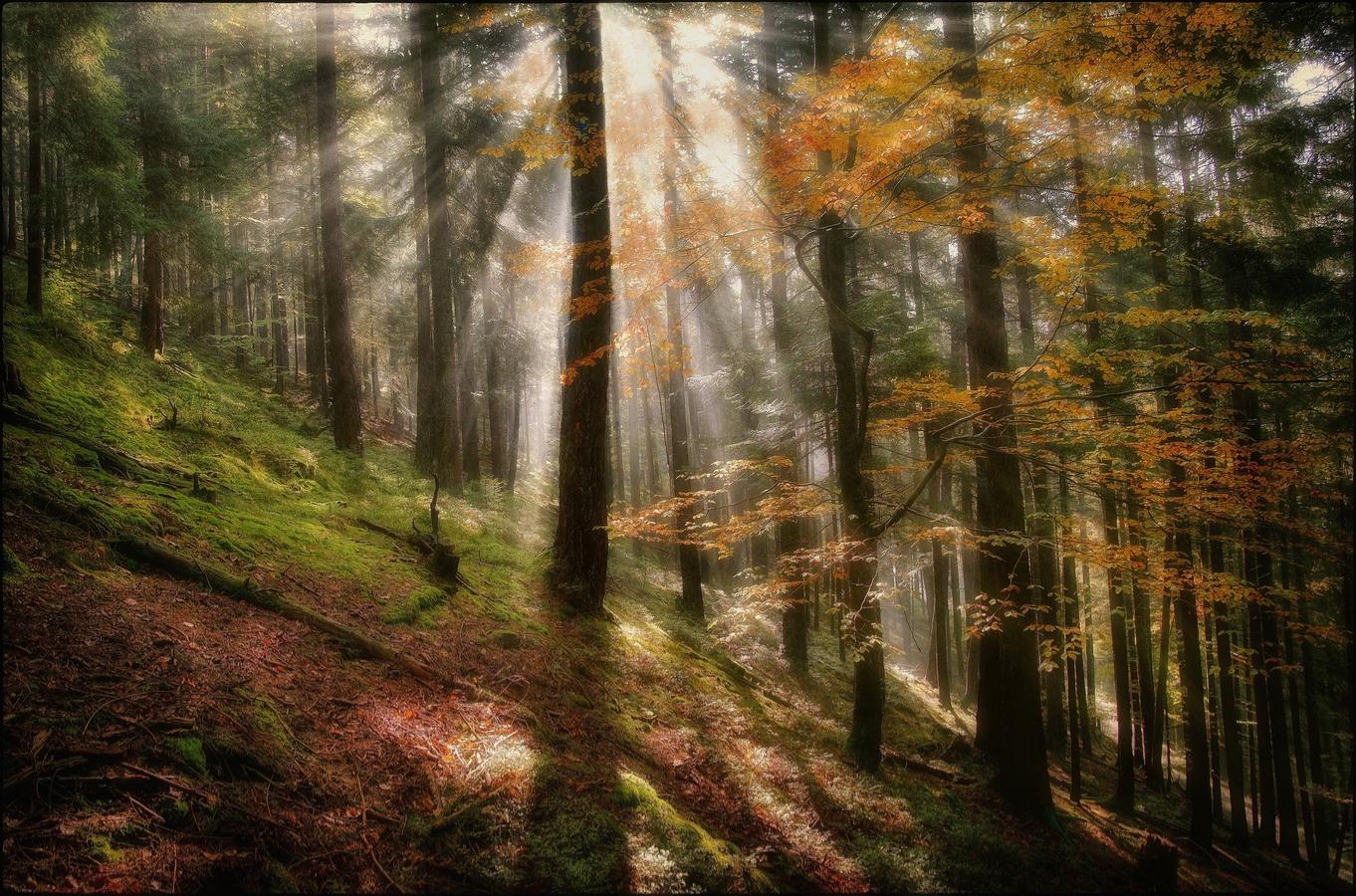 Světla a stíny