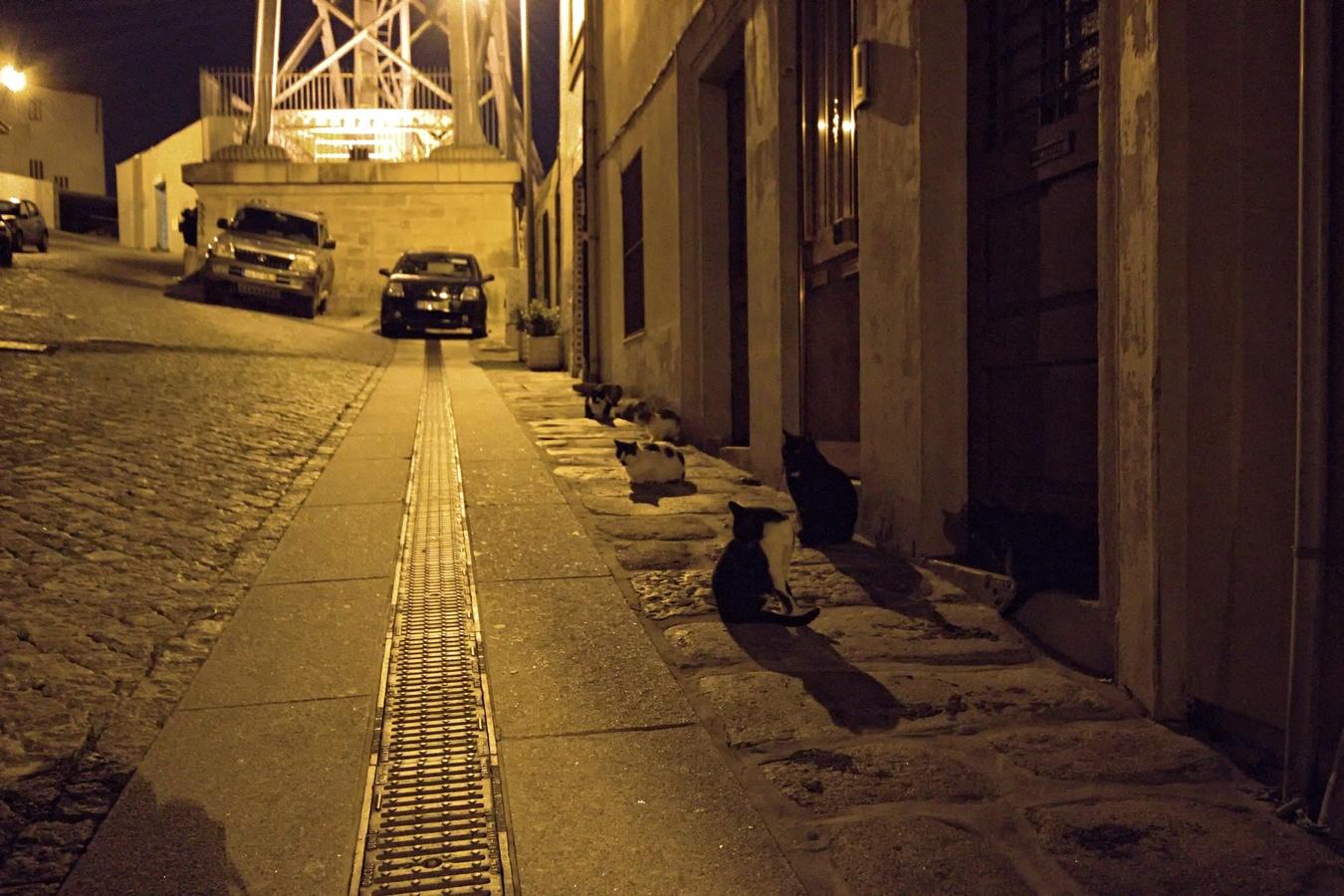 Gatos em Porto