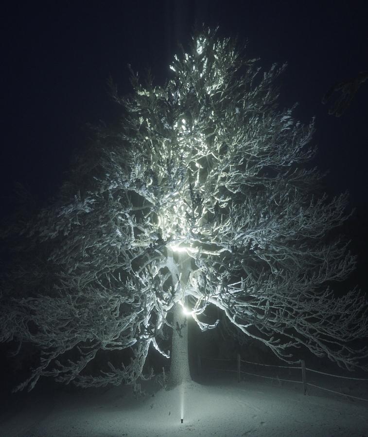 Před Vánoční strom u Šámalů.