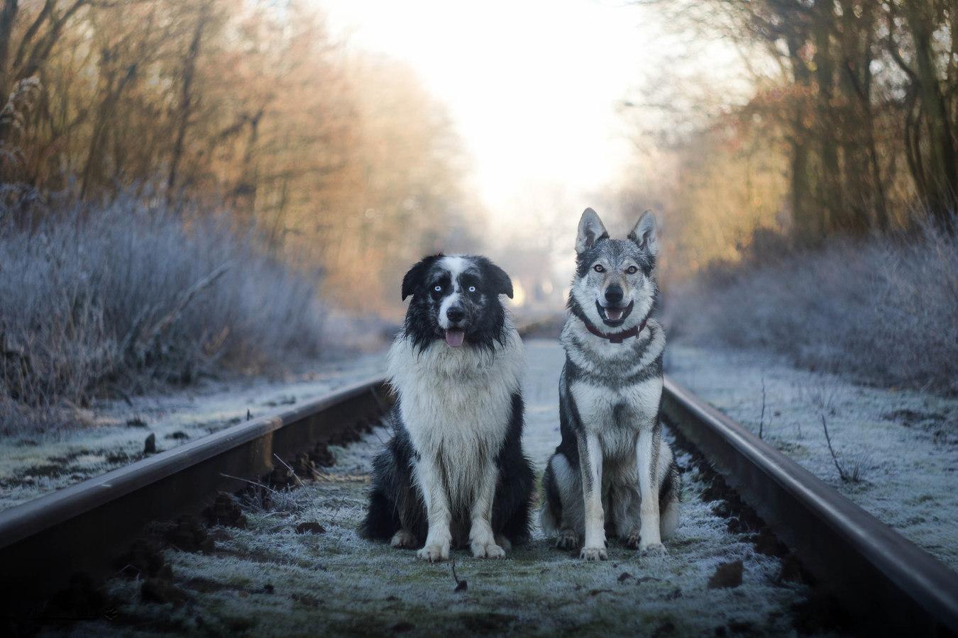 Nejlepší kamarádi