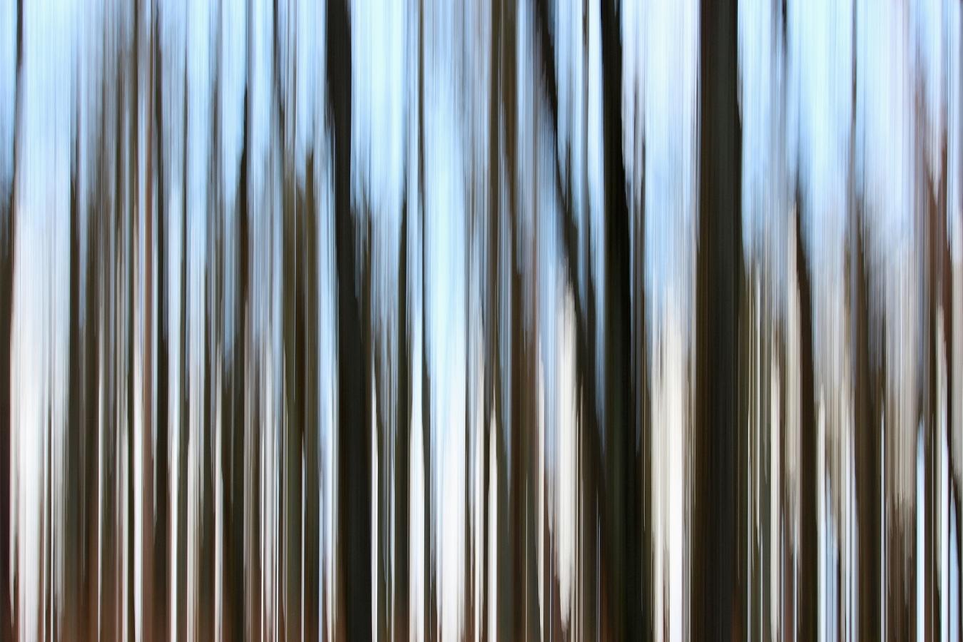 V lese.....