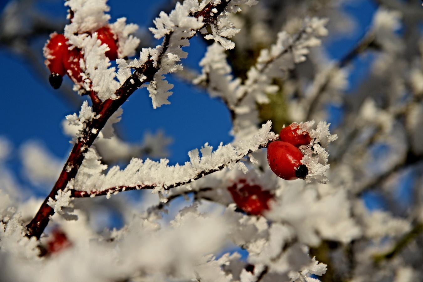 Zima čaruje IV.