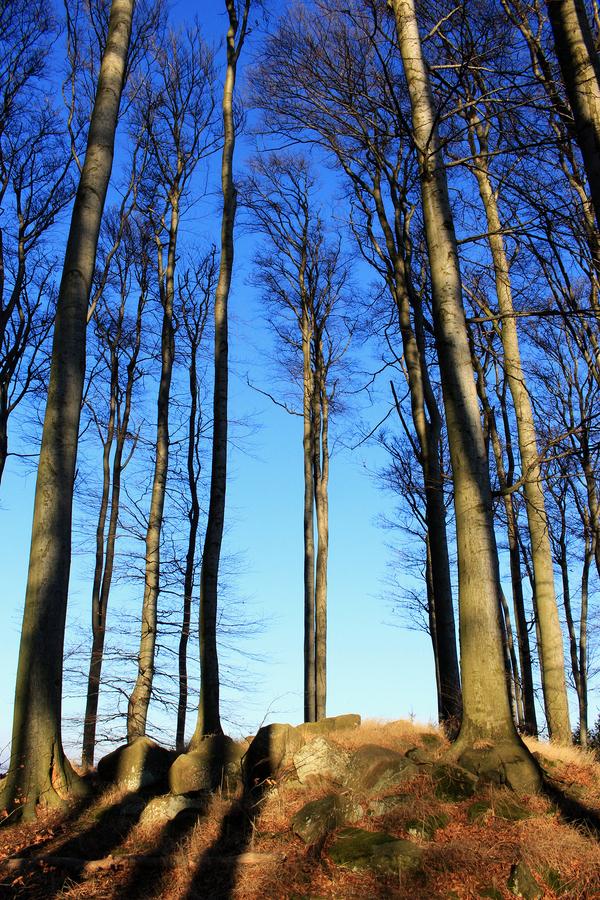 Stromy v Chřibech