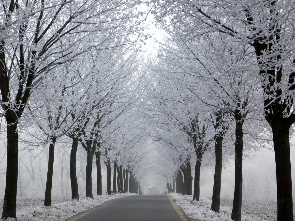 zimní alej