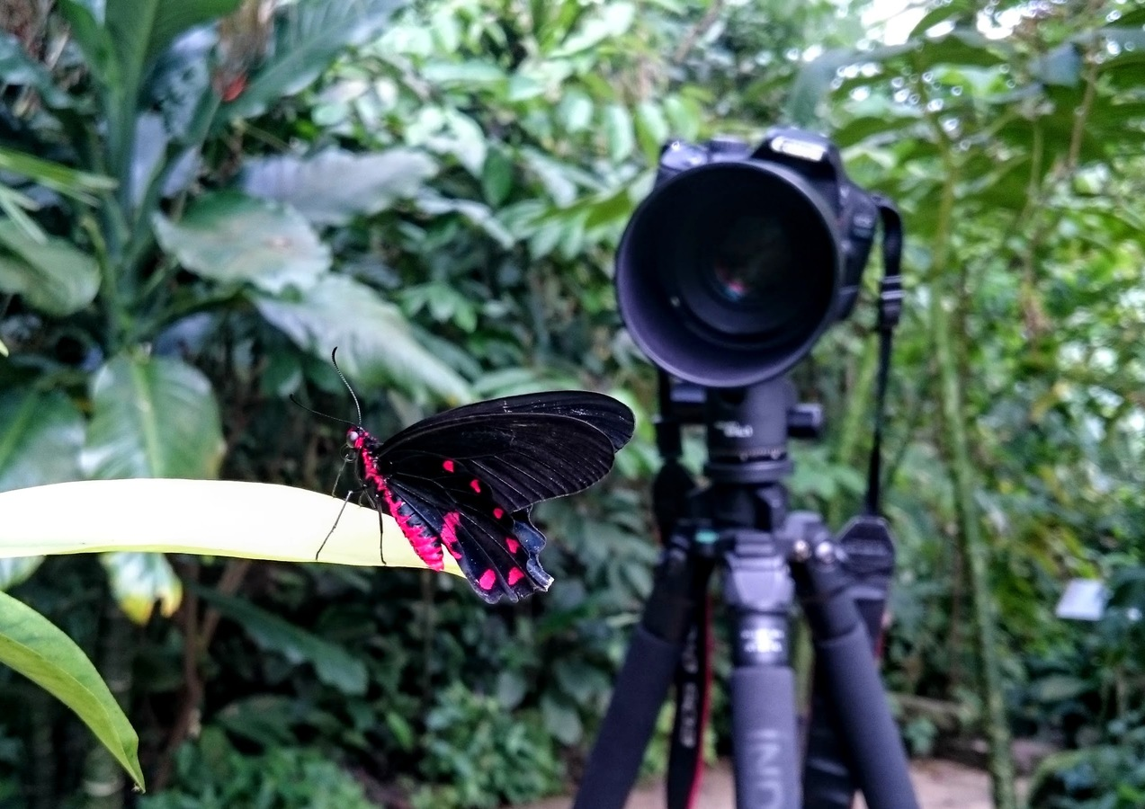 Kanón na motýla
