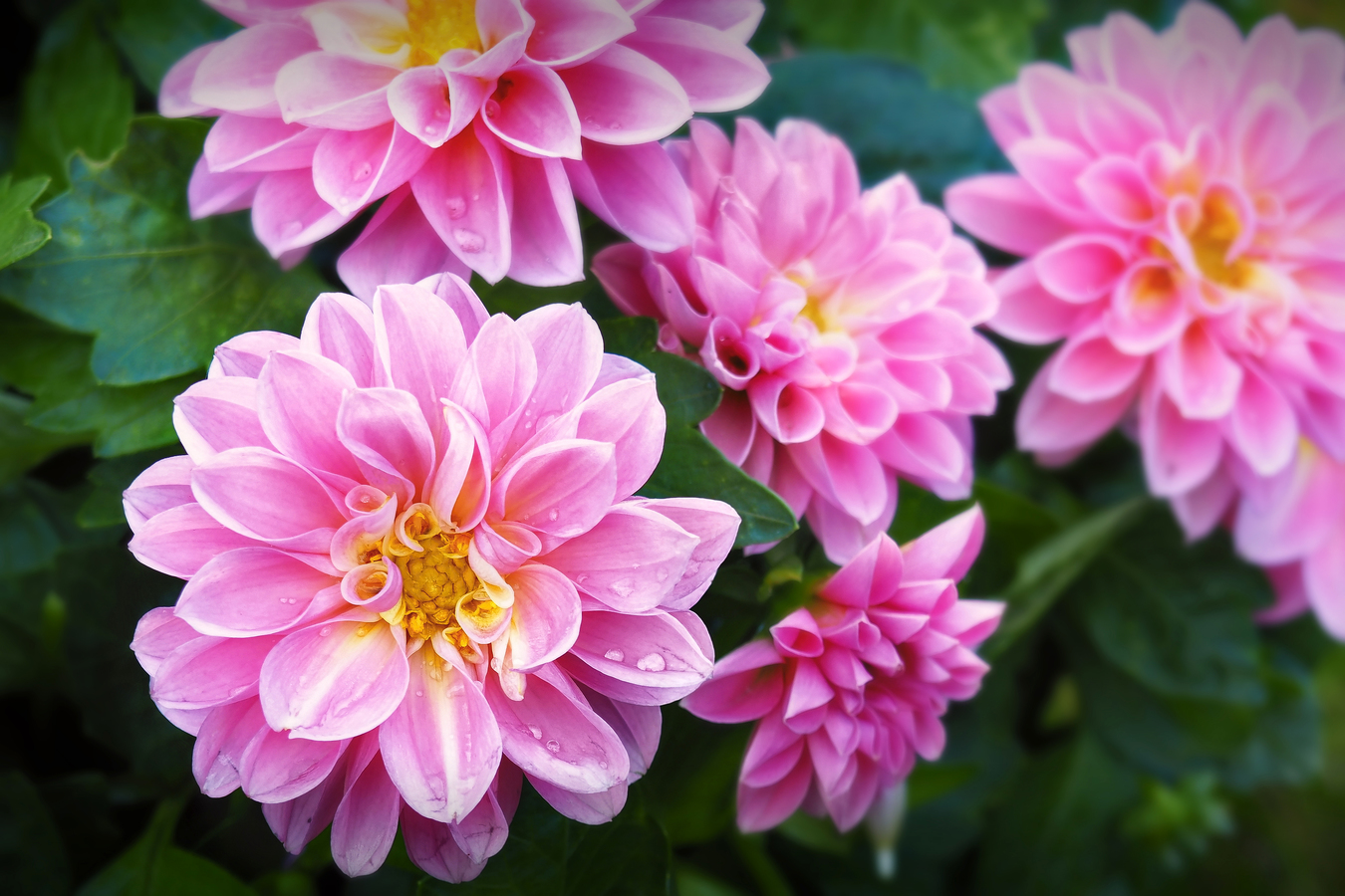 Krásné květy matčiných kytek