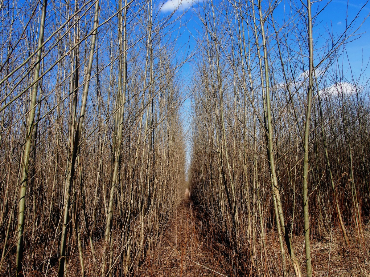 Školka - mladý les listnáčů