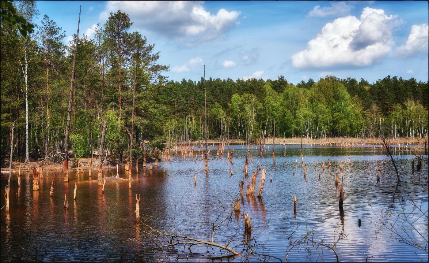 Leknická jezera VII