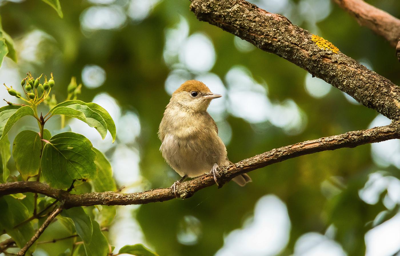 Ptáček - trpaslíček