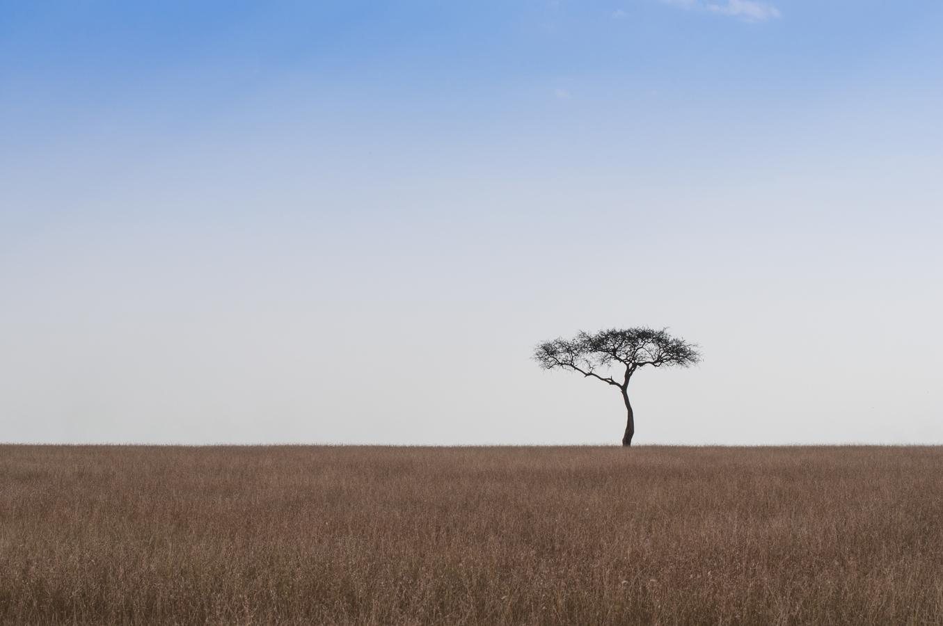 Strom v savaně
