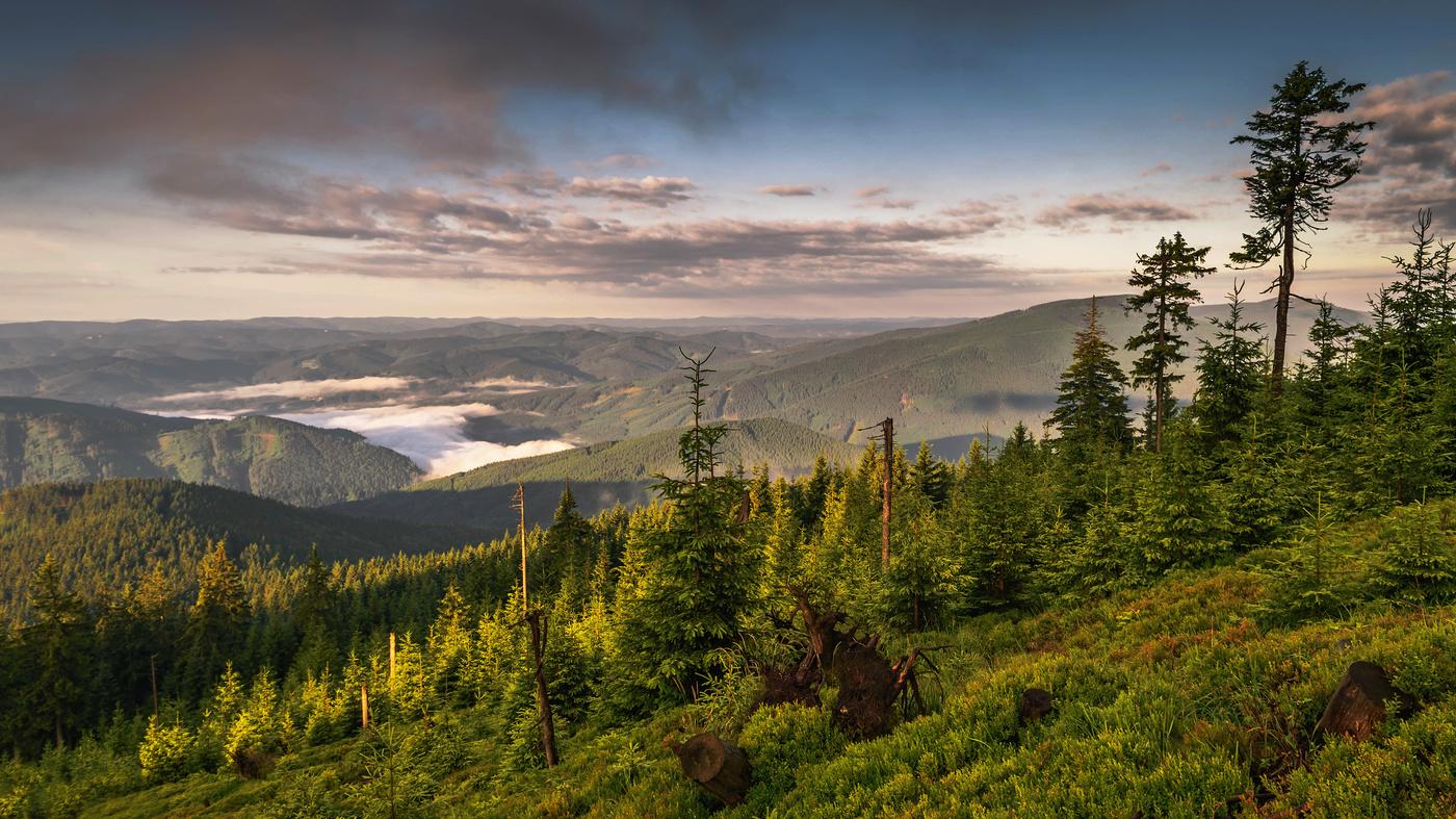 Ráno na kopci...
