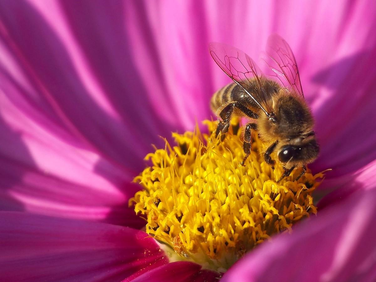 barevná včelka...