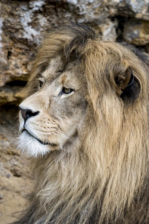 Na svobodě bych byl král.