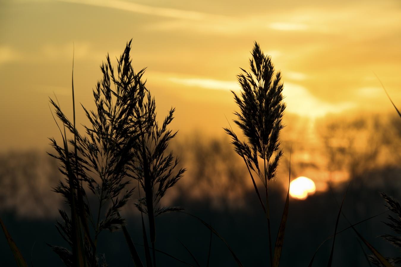 Podzimní traviny