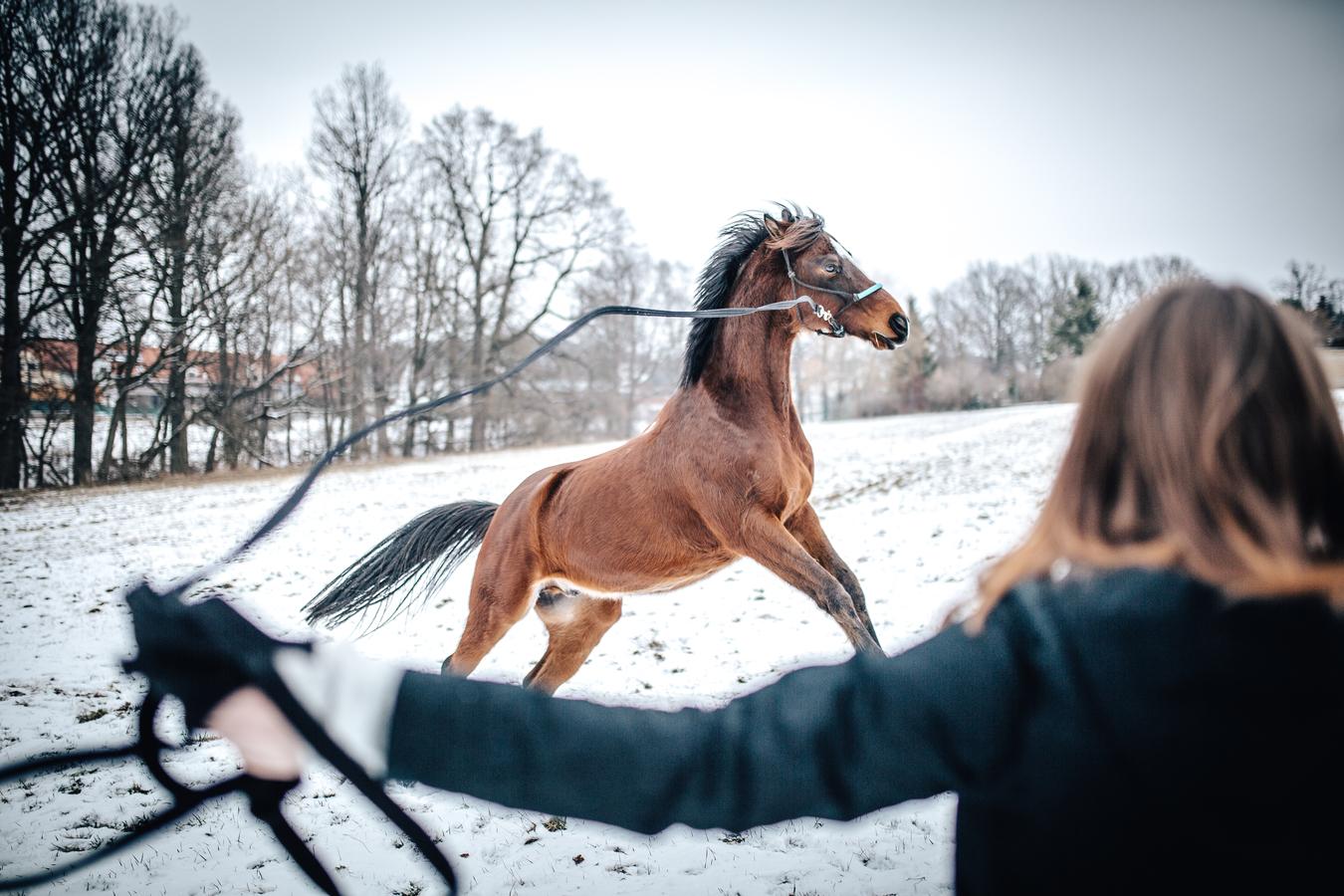 Jak zkrotit koně.