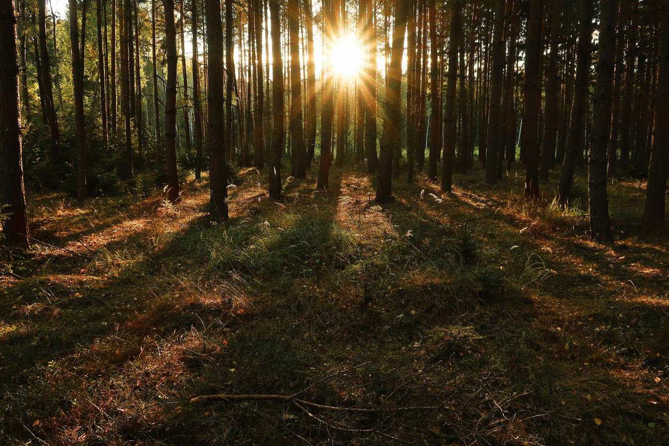 Lesní variace