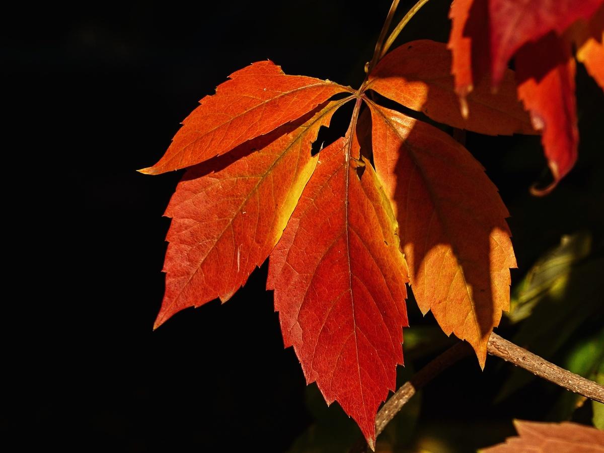 Vybarvený podzim...