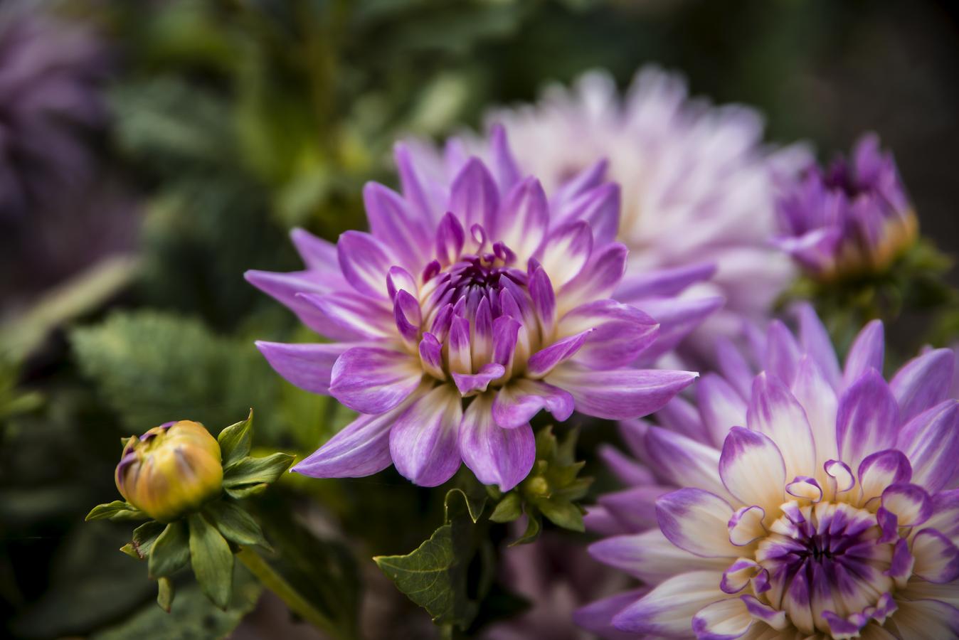 Rozkvetlé poslední květiny před zimou