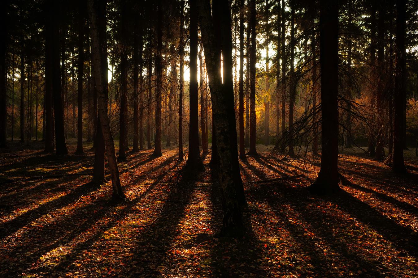 Stíny lesa II