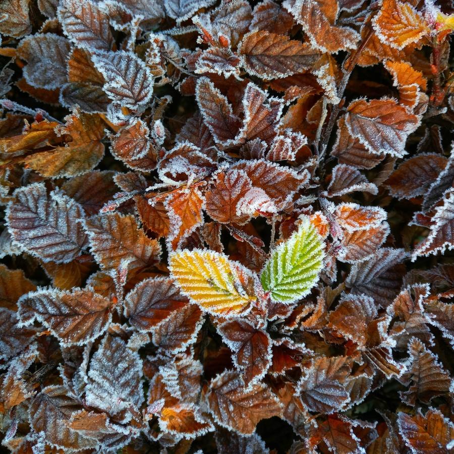 Barvy podzimu II