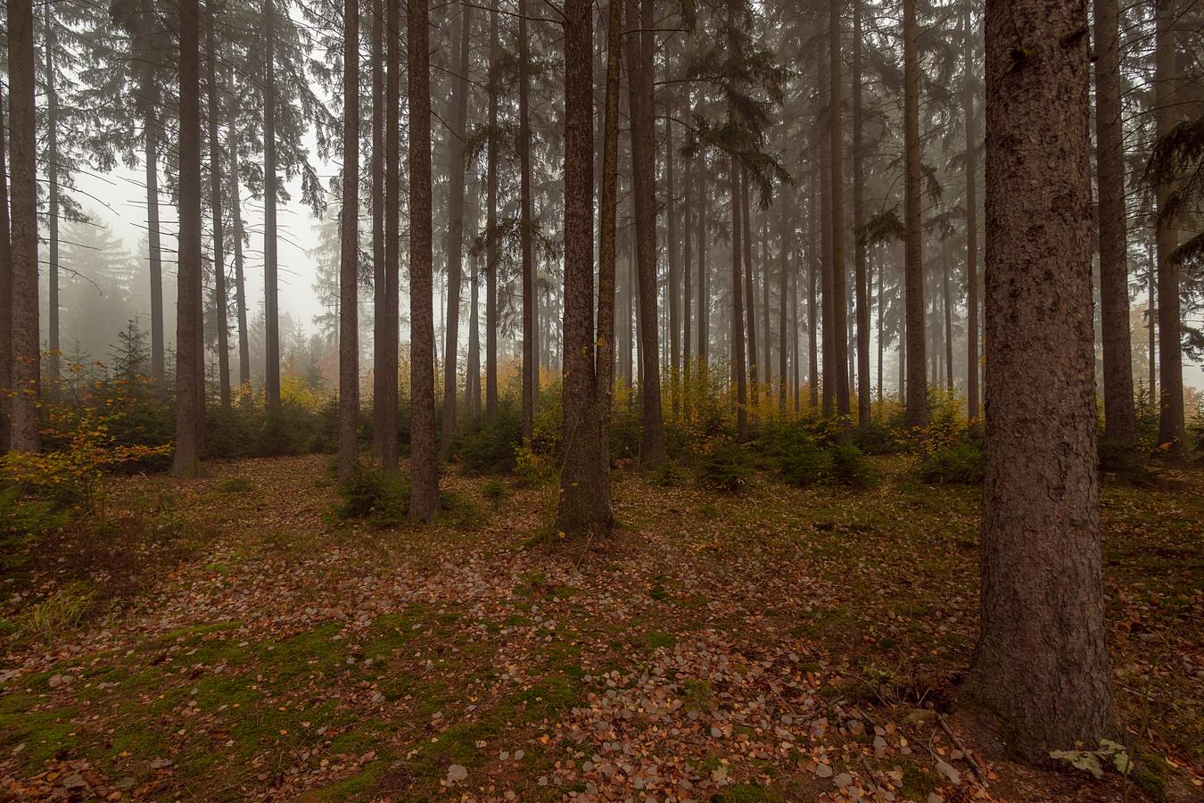 Podzim přichází
