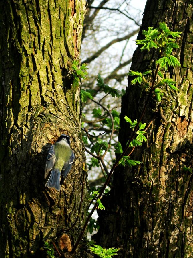 Frr do stromu