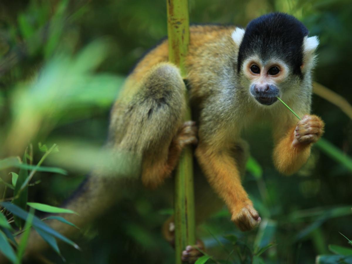...zamyšlená opice...