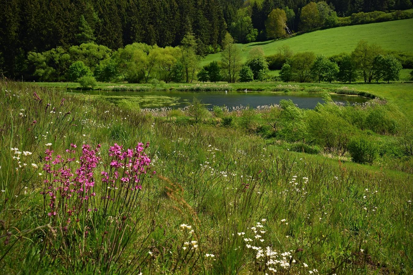 Rybník Šamonín u Brtnice