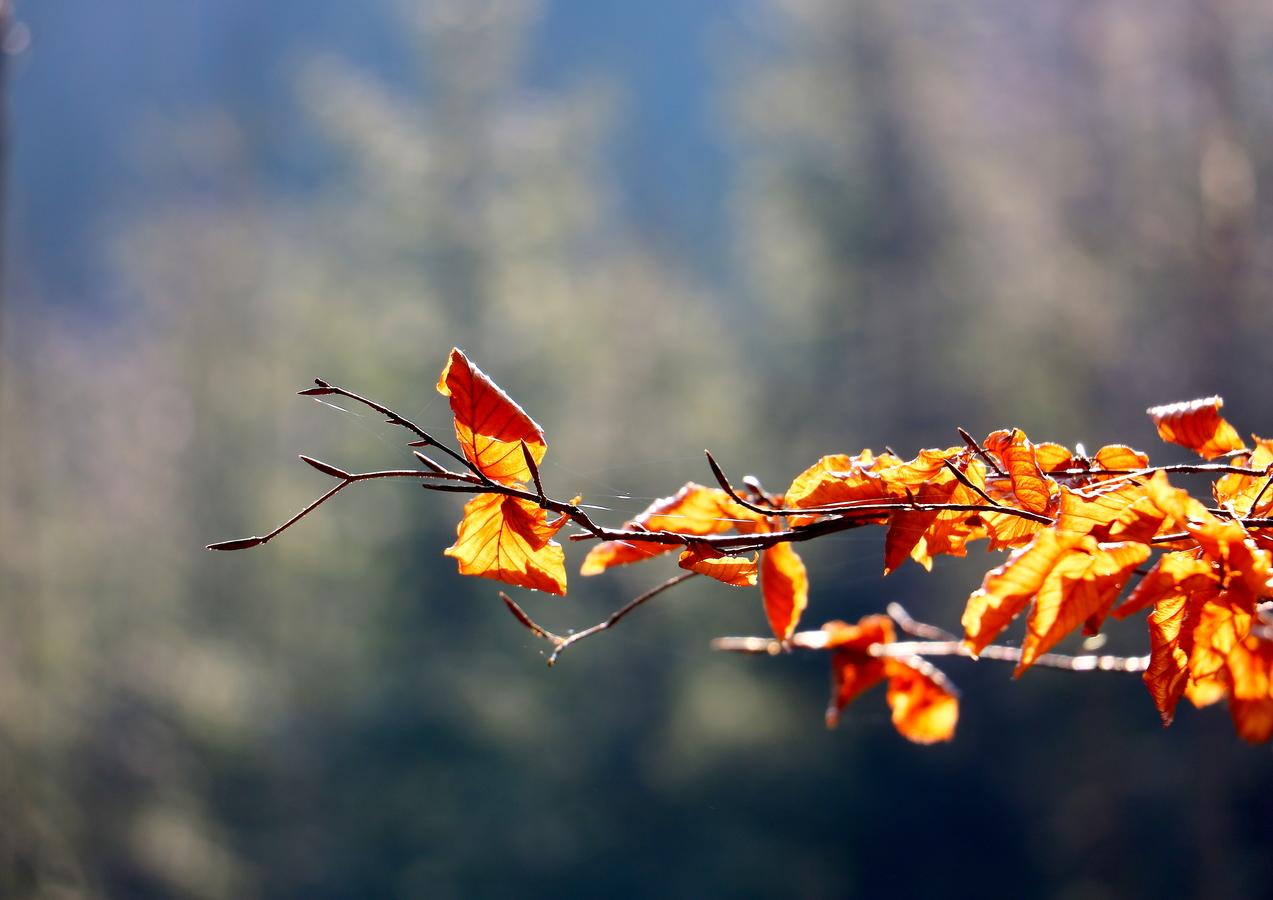 podzim?