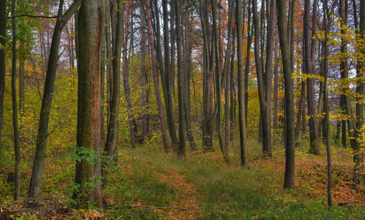 barevný les...