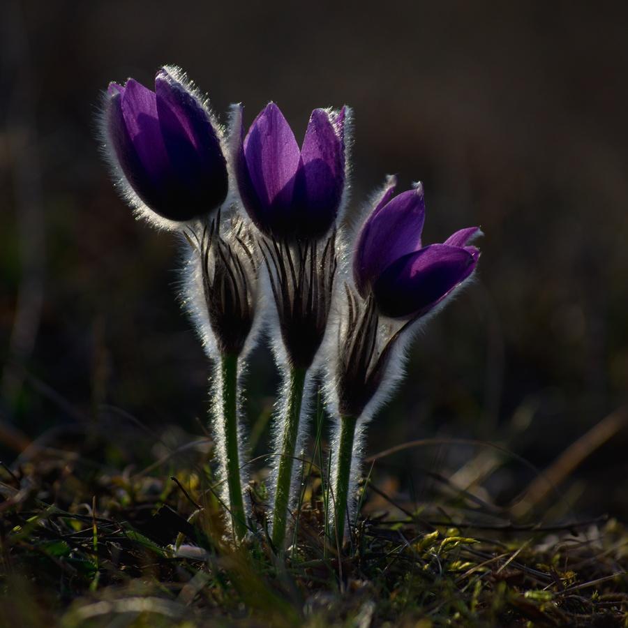 Moc se těším na jaro :-)