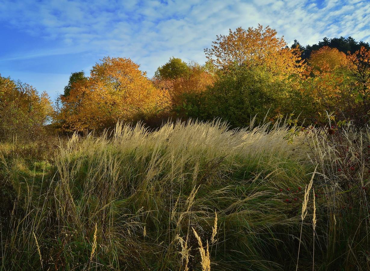 V travinách podzimu ..