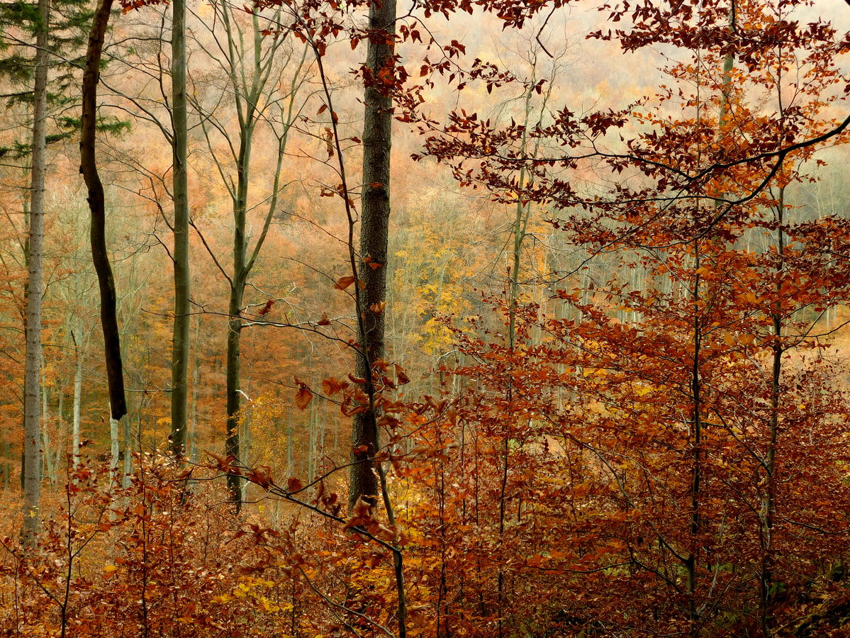 podzimní romance