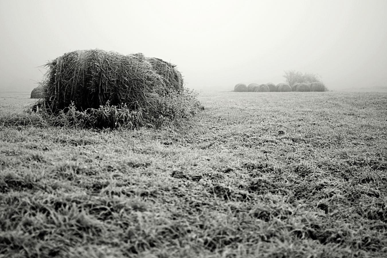 Mlha na poli
