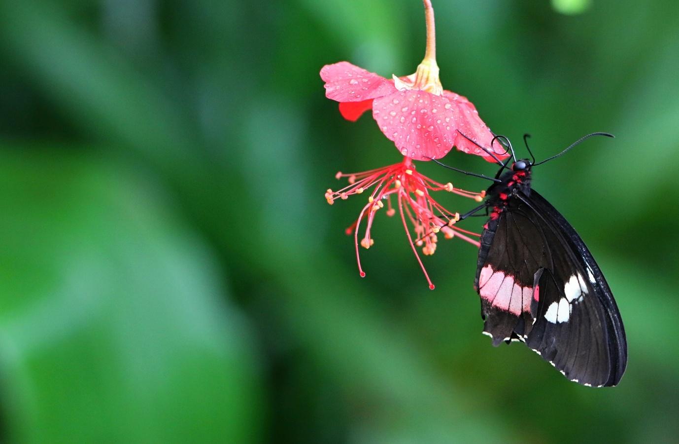 Motýlí nektar
