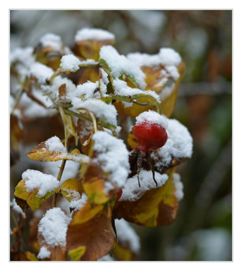 První sníh.........