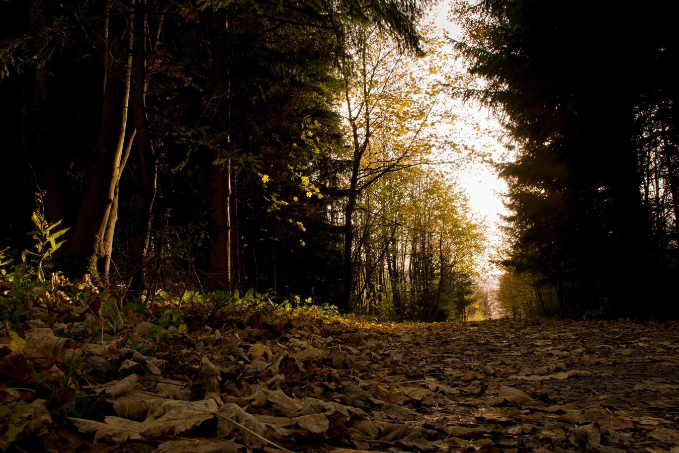 Pešinka v lese