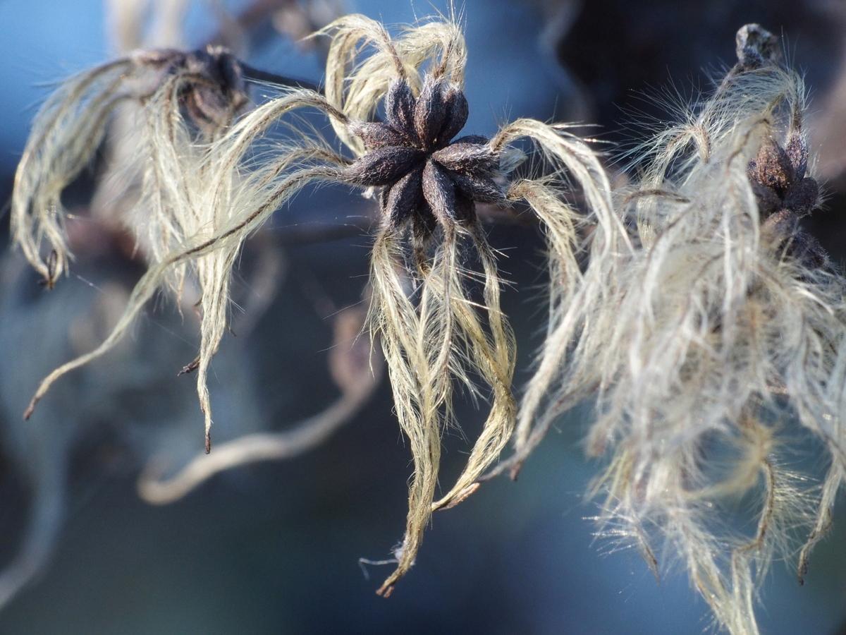 (pod)zimní příroda