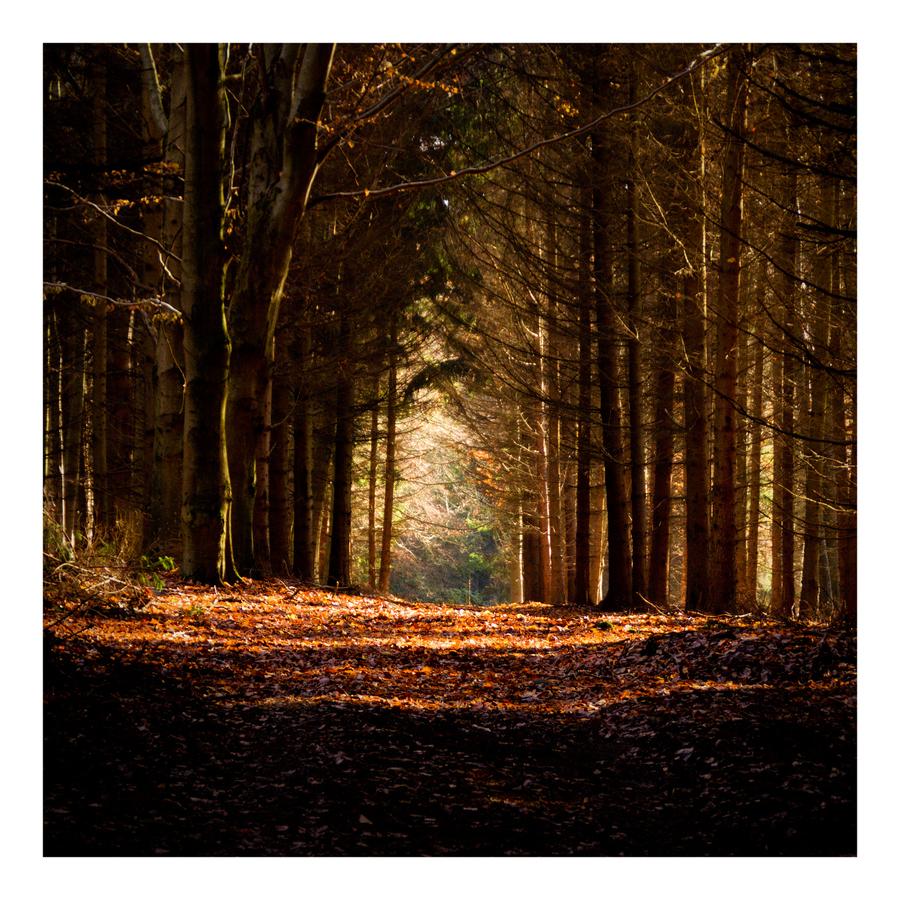 Podzimní cesta.....