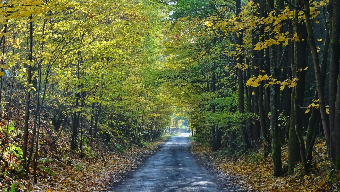 Cestou v barvách podzimu II